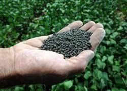 کود کشاورزی شیمیایی