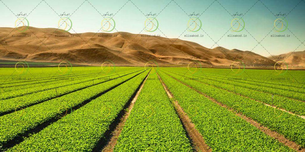 کود اوره اصفهان
